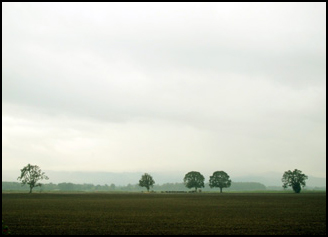 Rain and mist on Sauvie Island, Authors Road